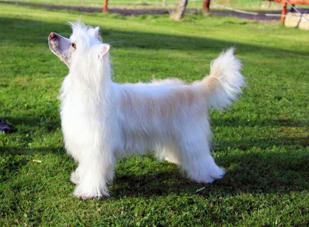 dogs_6566adda1d310c318e23f3d9b73c01cb.jpg.pagespeed.ce.l0-L8mV_Of